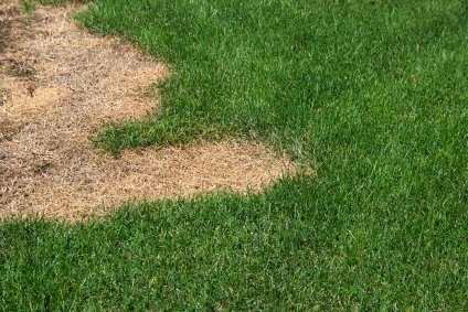 Sand Creek Township Lawn Fertilizer and Weed Control Company